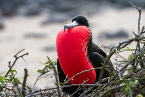Eine unvergessliche Reise nach Galapagos