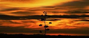 Sonnenuntergang in Afrika – Ein Foto mit Geschichte