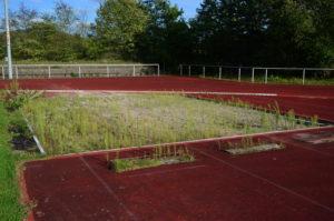 """Kunstrasen in der Schulsportanlage """"Wasgaustadion"""""""