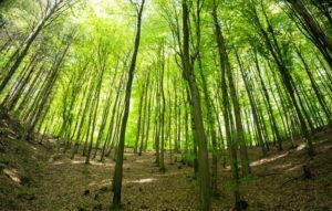 Im Jahr 2021 keine Holzernte im Gemeindewald Hauenstein